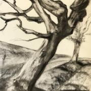 Monique arbres fusain 02 2020