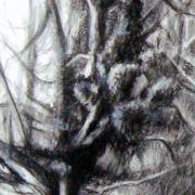 Nicole arbres 2 pierre noire 03 2020